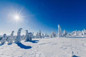 Beautiful winter landscape with snowy trees in Lapland, Finland. Frozen forest in winter.