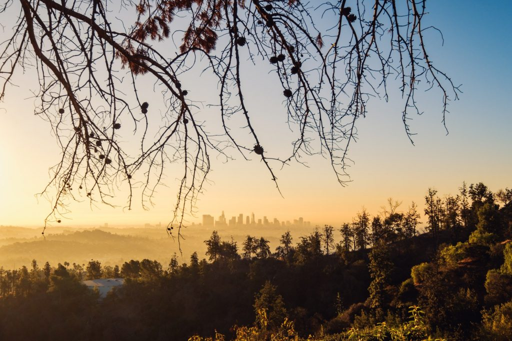 Los Angeles skyline at sunrise with trees in foreground, California